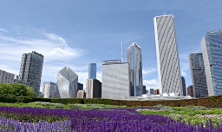 Lurie Garden with purple flowers in Millennium Park Chicago